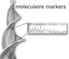 hersentumor moleculaire markers classificatie